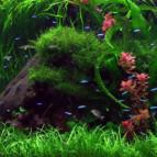Основы ухода за пресноводным аквариумом